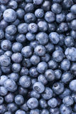Blueberry Background Stock Images