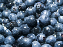 Blueberry Background Royalty Free Stock Photos