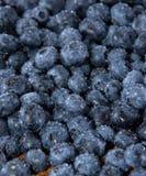 Blueberry Background Royalty Free Stock Photo