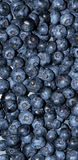 Blueberry Background royalty free stock photo