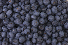 Blueberry Background. Close-up of a pile of blueberries. Can be used as a background Stock Photography