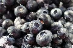Blueberry background Royalty Free Stock Photography