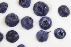 Blueberry background.Concept: Healthy living, fresh nutritions, fitness diet. Blueberries in a spoon with blueberry background.Concept: Healthy living, fresh Royalty Free Stock Photography