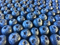 Blueberries, laid out in neat rows stock images