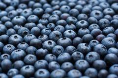 Blueberry background Royalty Free Stock Photography