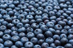 Blueberry background Royalty Free Stock Image
