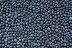 Blueberry background Stock Photos