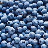 Blueberry background Royalty Free Stock Images