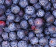 Blueberry background. Macro Stock Photos