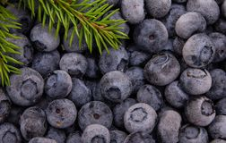 Blueberry background macro shot Royalty Free Stock Photos