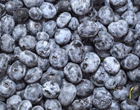 Blueberry background Royalty Free Stock Photos