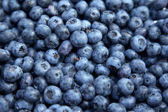 Blueberry background. Selective focus Stock Photo