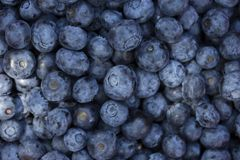 Blueberry background.Top view. Ripe and juicy fresh picked blueberries closeup. royalty free stock images
