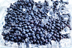 Blueberry backgroung. berries with ice Royalty Free Stock Image