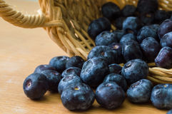 Blueberry with basket. On wood table stock photo