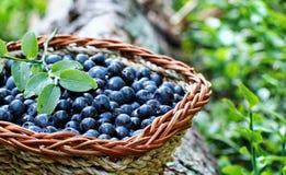 Blueberry in a basket. Bio blueberry in a basket Royalty Free Stock Photos