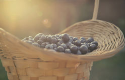 Blueberry basket Royalty Free Stock Images