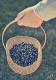 Blueberry basket Stock Images