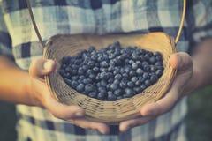 Blueberry basket Royalty Free Stock Photo