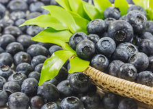 Blueberry on the basket Stock Image