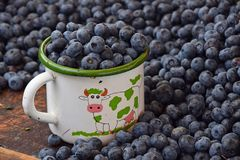 Blueberry, berries, blue, fresh, ripe, closeup, mug, cup, enamel Stock Photos