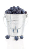 Blueberry berries in a metal bucket Stock Image