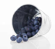 Blueberry berries Stock Photography