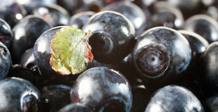 Blueberry berry Royalty Free Stock Photos