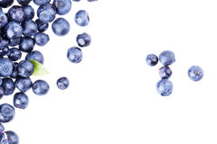 Blueberry berry Royalty Free Stock Photo