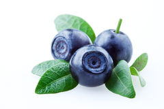 Blueberry. bilberries with leaves isolated Royalty Free Stock Photo