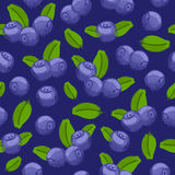 Blueberry bilberry painted vector seamless pattern. Royalty Free Stock Photography