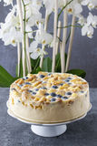 Blueberry and blackberry cheesecake with ladyfinger biscuits Stock Images