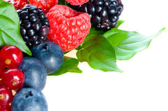 Blueberry, blackberry, raspberry. fresh berries Royalty Free Stock Image
