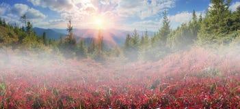 Blueberry blanket of autumn Royalty Free Stock Photos