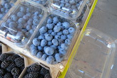 Blueberry blueberries Stock Photography