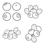 Blueberry Cranberry. Vector Illustration Hand Drawn Cartoon Art Stock Image