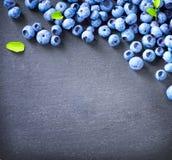 Blueberry border design Stock Photos
