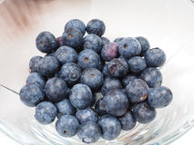 Blueberry bowl Royalty Free Stock Images