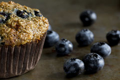 Blueberry Bran Muffin with Blueberries Royalty Free Stock Photos