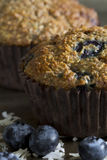 Blueberry Bran Muffins - Close Up Royalty Free Stock Photo