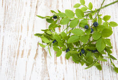 Blueberry branch Stock Photography
