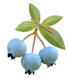 Blueberry on branches of a bush Stock Photo