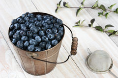 Blueberry Bucket With Leaves royalty free stock photo