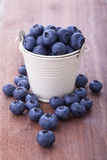 Blueberry in a bucket Stock Image