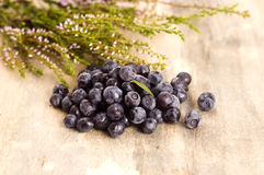 Blueberry bush Royalty Free Stock Photos