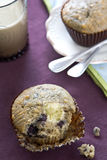 Blueberry cheese muffin Royalty Free Stock Photos