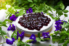 Blueberry cheese pie Royalty Free Stock Photography