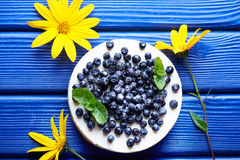 Blueberry cheesecake on a blue wooden background Stock Images