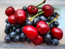 Blueberry and cherry in the box royalty free stock image