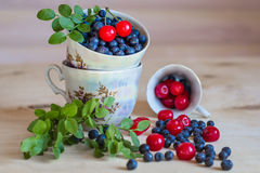 Blueberry and cherry still life, light background Stock Images